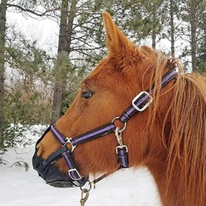 Pack-N-Pony