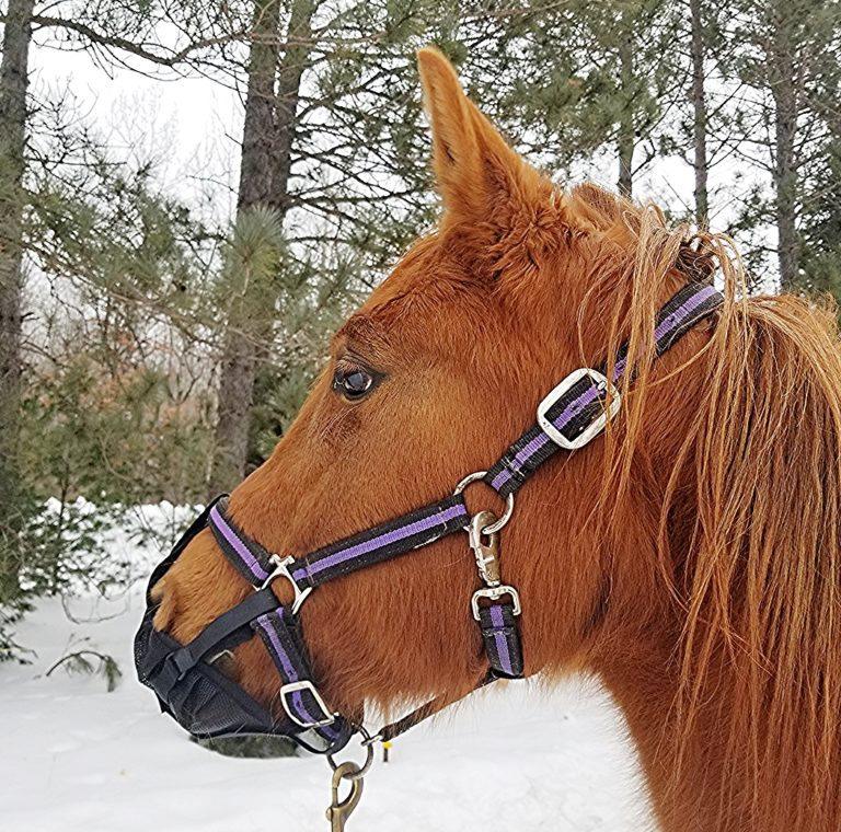 For leading, packing, or ponying, the Pack-N-Pony prevents nibbling.